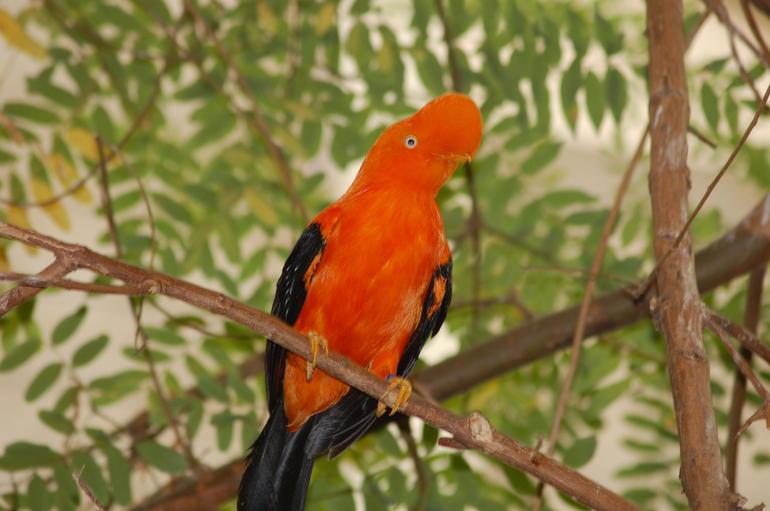 Bird - San Diego