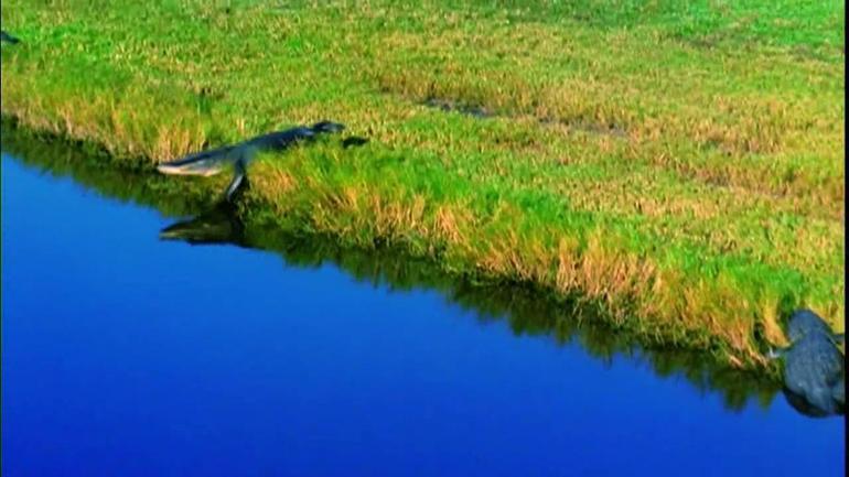 Croc - Orlando