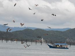 Wow, this was so amazing to see the Giant Birds come down and feed from the driver, something to think about on your next trip to Langkawi. The surprise after is a wonder reminder, thankyou again for..., Jude - November 2010