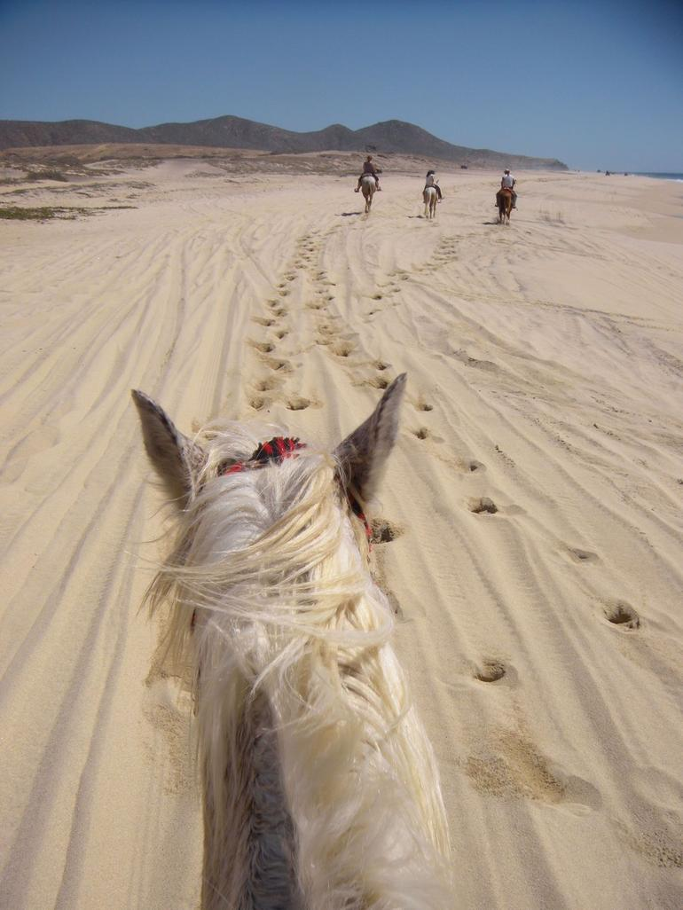 Los Cabos Horseback Riding photo 20