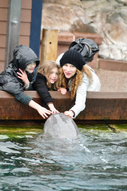 Petting the dolphin, Michelle A - March 2011