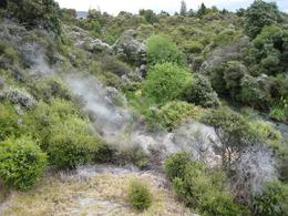 Rotorua Geyser. - November 2007