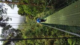 Swinging bridge tour - Monte Verda , gators64739 - July 2017