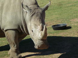 So prehistoric..., JennyC - February 2012