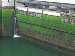 Ballard Locks: Closeup shot of mossy walls within the locks with water low - August 2011