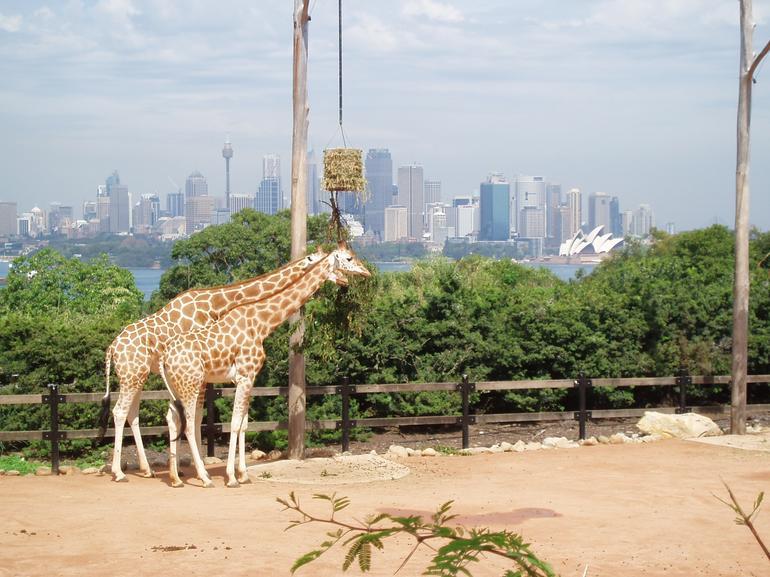 giraffeswithaview - Sydney