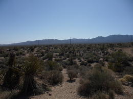 In the Nevada Desert, CoyoteLovely - June 2011