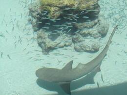 The Shark Tank - August 2011