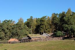 Viking Farm , Diana T - October 2016