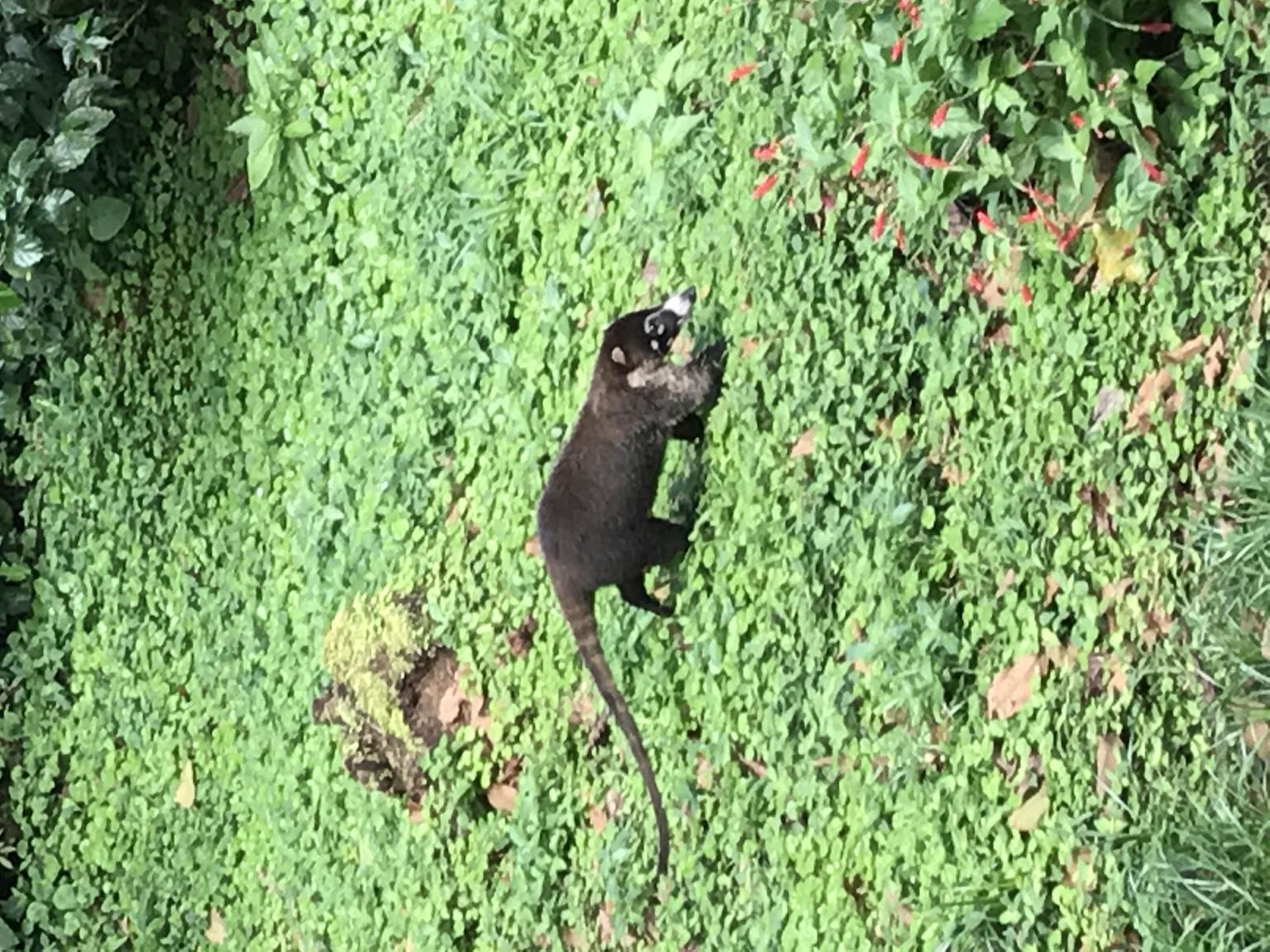 MÁS FOTOS, Rio Celeste Hiking, Sloth Sanctuary & Llanos de Cortes Waterfall Tour