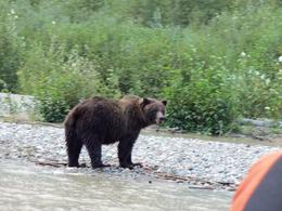 As we were and quot;floating and quot; down the river we saw a brown bear come out scoop up a salmon and eat it. Great experience , Mark P - September 2011
