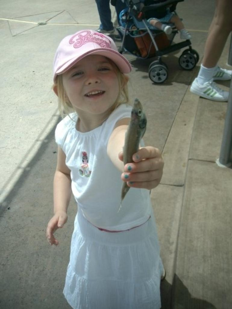 haley's fish for the seals -