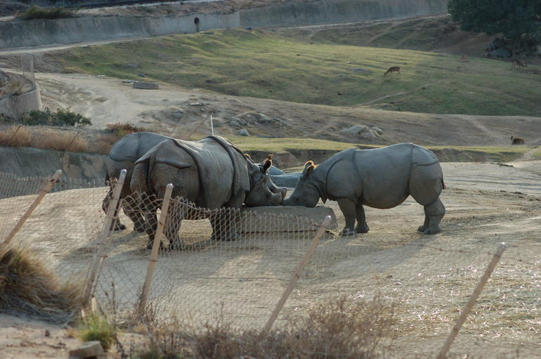 Rhinos, San Diego Zoo Safari Park - San Diego