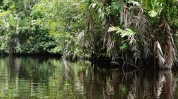 Amazon like water 2 , Bipin K - August 2016