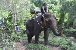 Riding an elephant through the jungle. , snetsky - October 2015