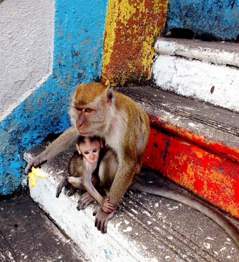 Monkeys - Kuala Lumpur