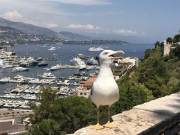 A little friend looking down on harbour in Monaco from the Princes Palace , kerry - October 2017