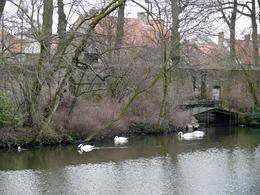 Swans, Barbara F - March 2010