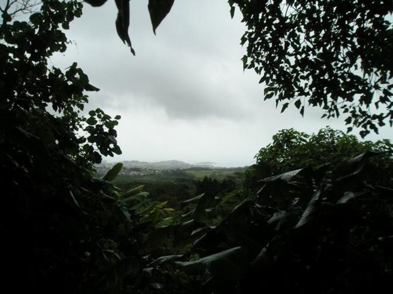 Jungle view - Oahu
