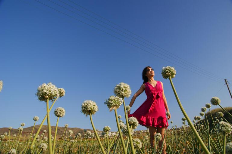 Onion Field -