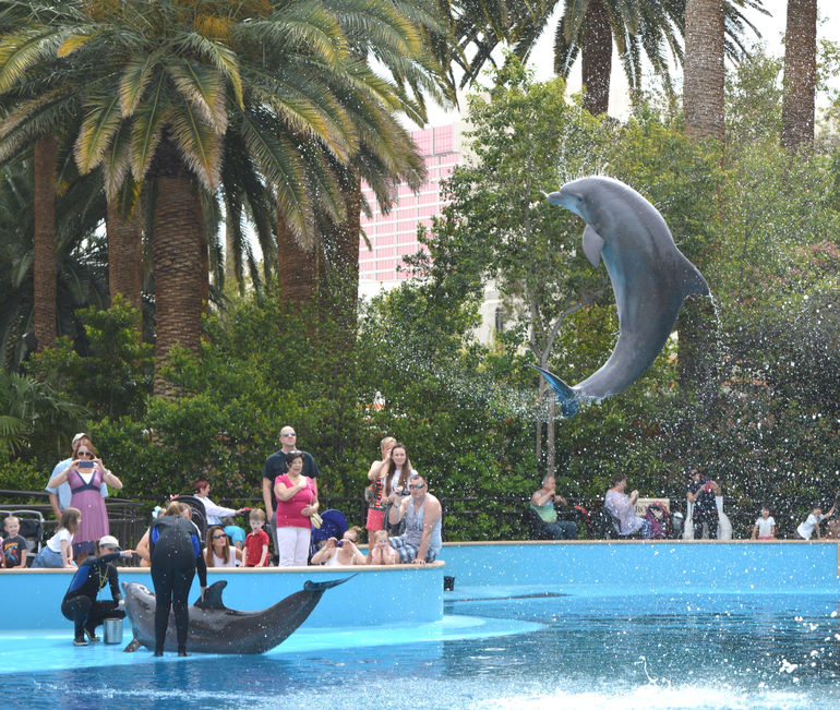 siegfried roys secret garden and dolphin habitat at the mirage hotel and casino 2018 triphobo - Siegfried And Roy Secret Garden