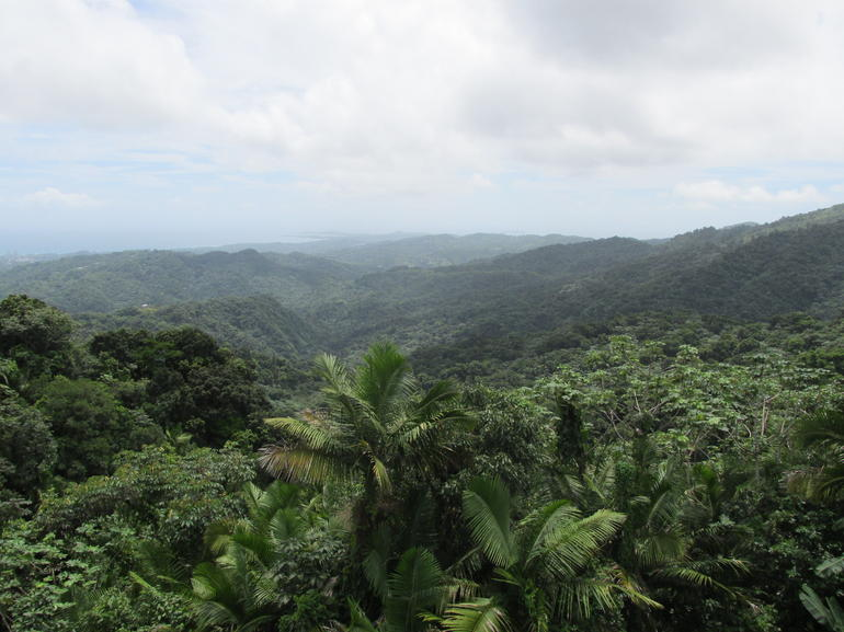 The view from the Top of the Yokahu Observation Tower! - San Juan