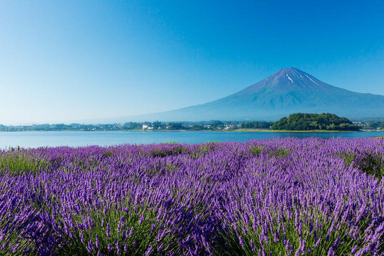 Mt. Fuji 5th Station, Lake Kawaguchi & Seasonal Fruits Picking from Tokyo photo 16
