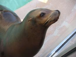 Sea lion up close - October 2009
