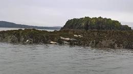 Seals near to Lincholm Island : , Barbara B - September 2016
