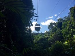 The Sky Rail gave a wonderful opportunity to see the canopy of the rainforest. There were two transfer stations on the Sky Rail - I recommend that you get off and hike around for some spectacular ... , jeanievan - September 2016