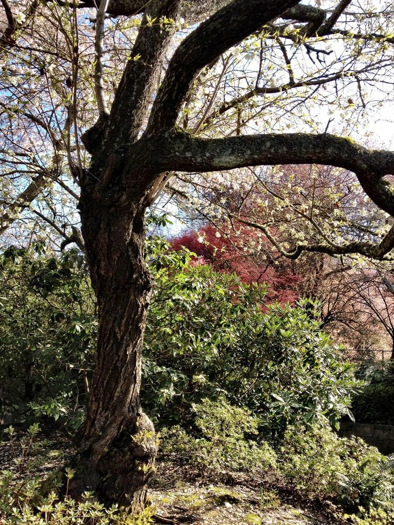Trees - Portland