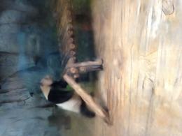 PANDA!! , Dale W - October 2017