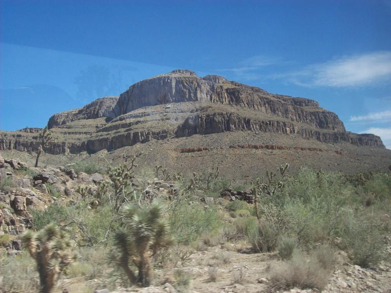 Joshua Tree Forest - Las Vegas