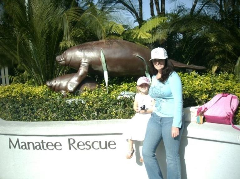 manatee rescue aquarium -