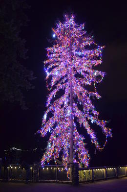 Amazing, huge fully-lit tree! Spectacular., taylor - November 2012