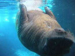 Hello walrus! - October 2009