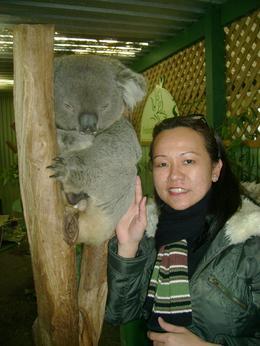 Koala bear up close - July 2009