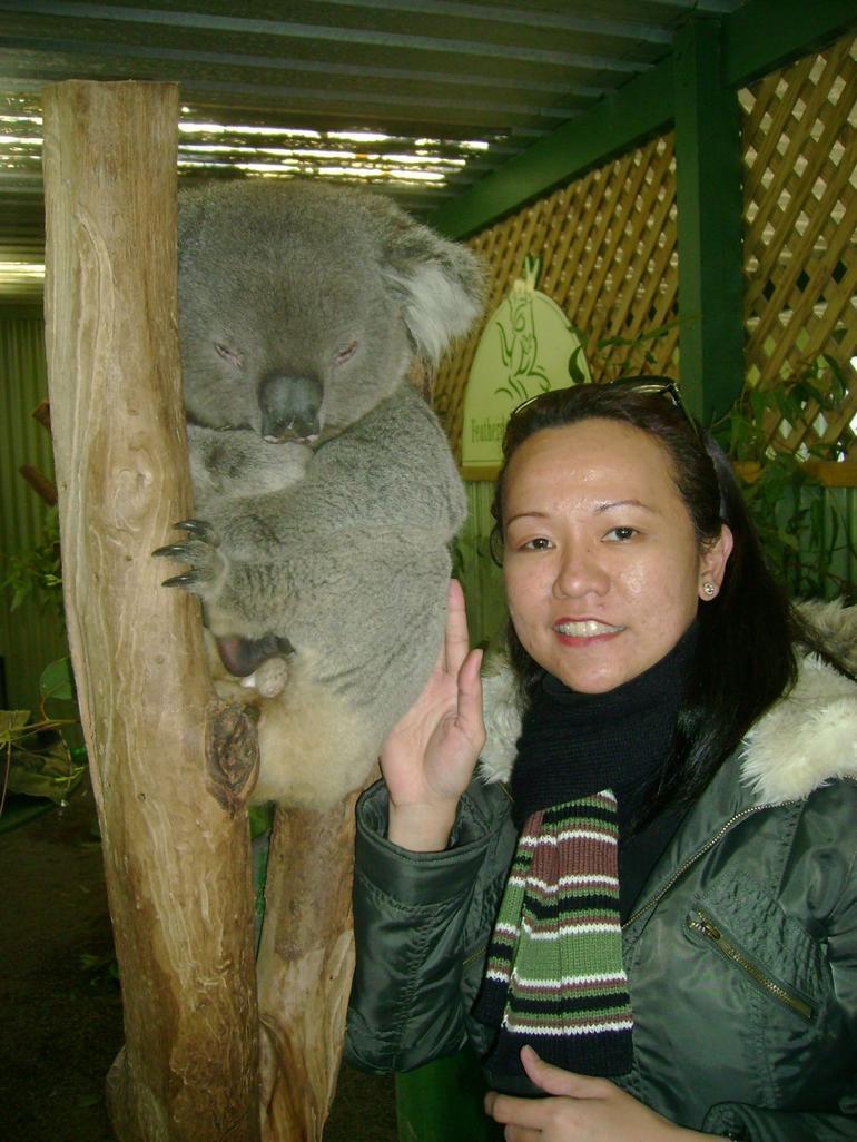 Koala Bear - Sydney