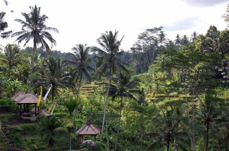Terraced Rice Fields - Bali - Bali