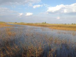 From the airboat , facappo - November 2016