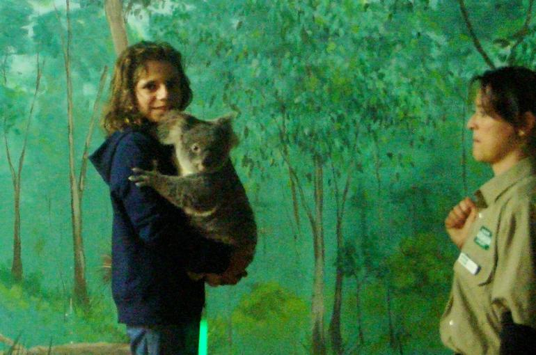 Cuddling with the koalas - Gold Coast