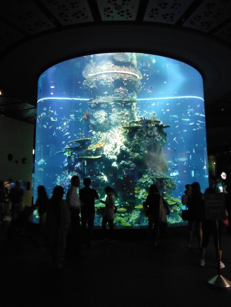 Devant l'aquarium cylindrique - Singapore