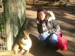 Friendly Kangaroo - July 2009