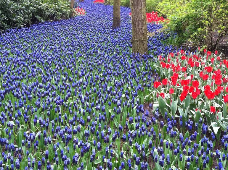 Keukenhof Gardens, Amsterdam.JPG - Amsterdam