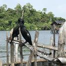 Southern Sri Lanka Sightseeing Private Day Trip, Galle, SRI LANKA
