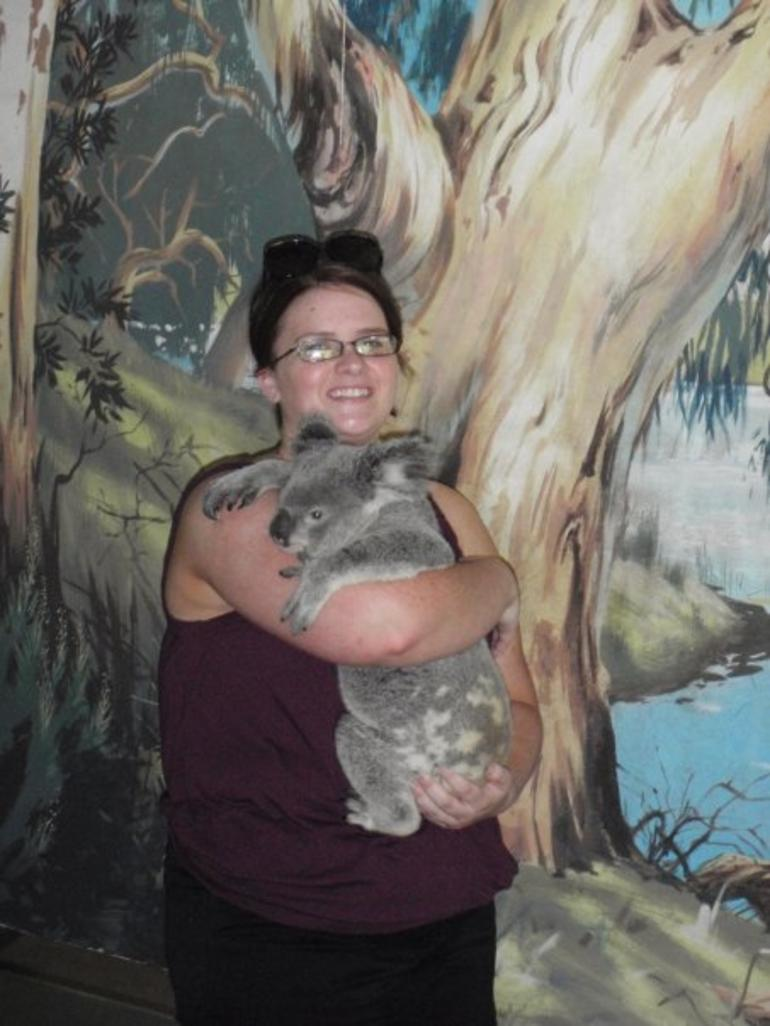 cairns zoo hold a koala -