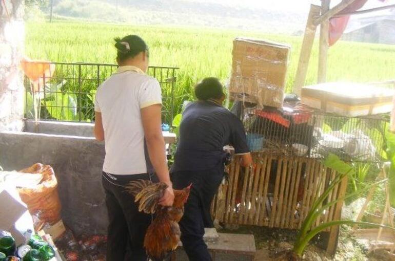 Farm - Xian
