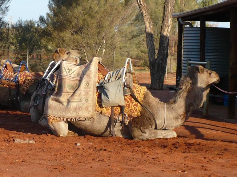 My Camel!! - Ayers Rock