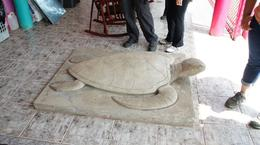 The only turtle you will see , Bipin K - August 2016