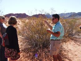 Learning about desert plants - March 2009